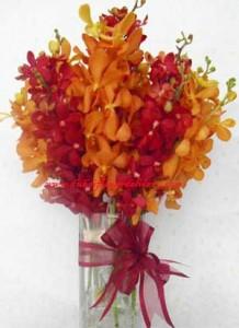 orchids-red-orange