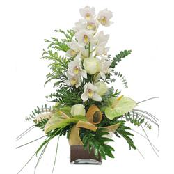 orchids and anthurium