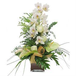orchids-arrangement