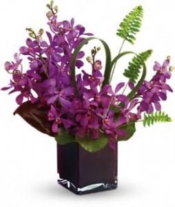 mokara-purple