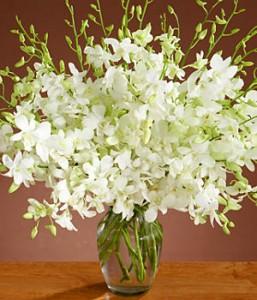 Flowers of Peace in Dubai