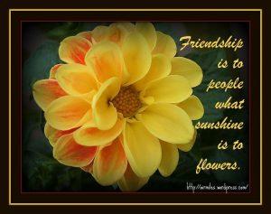 Friendship Flowers in Dubai