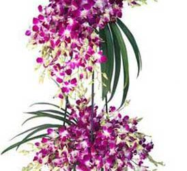 60 purple orchid flower stand