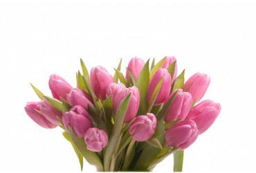 Buy flowers Dubai to Help someone refresh