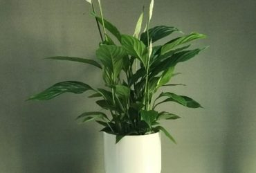 choose-and-send-plant-gifts